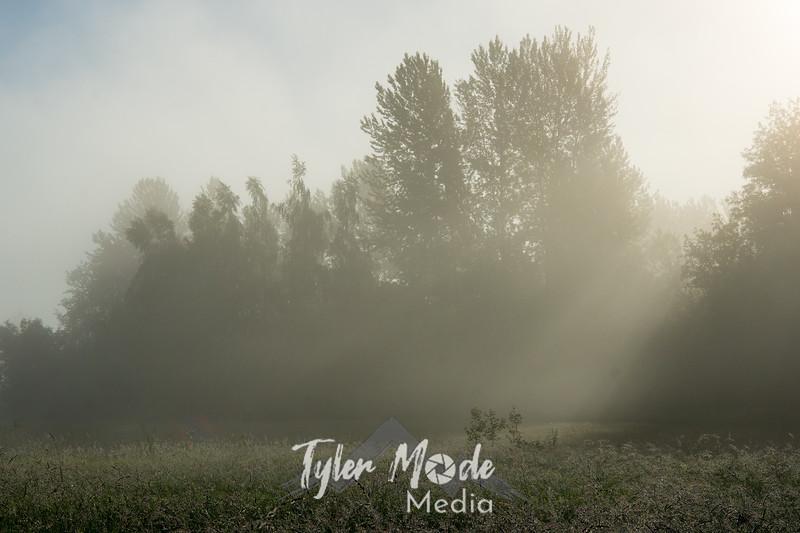52  G Field Mist