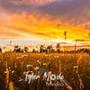 16  G Sunset and Grass