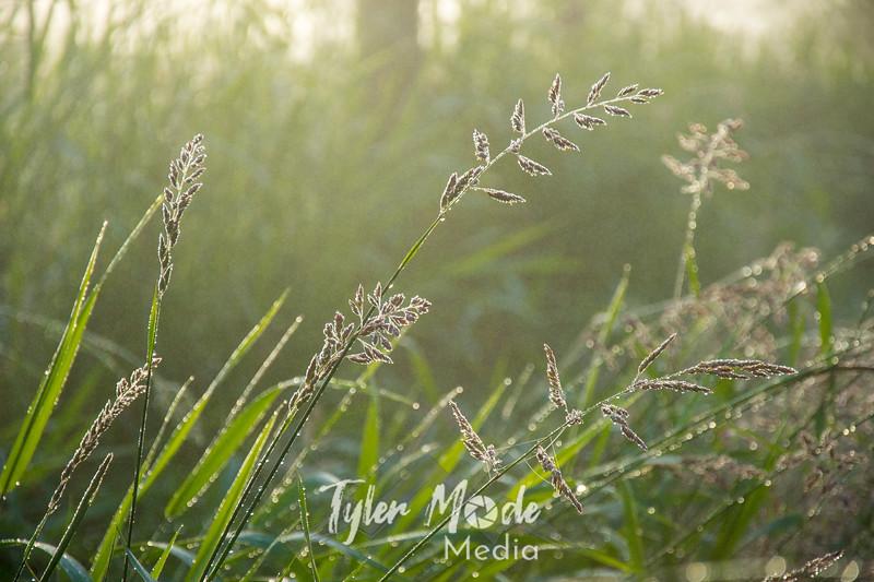 17  G Dew on Grass