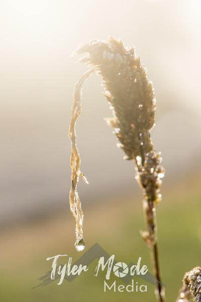 30  G Grass Dew V