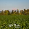 7 27 18 Mt  Hood and Corn