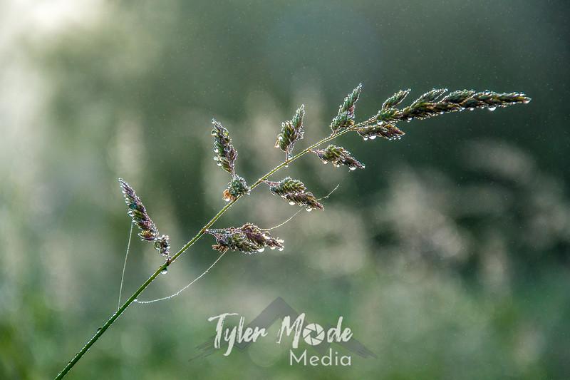 70  G Grass Dew Close