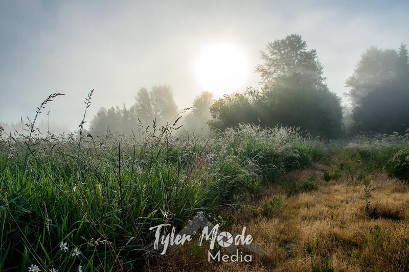 65  G Field Mist