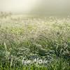 53  G Field Mist