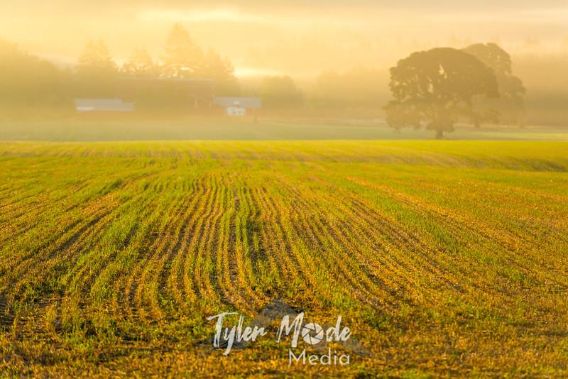 32  G Sunrise Mist Field and Tree