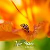 27  G Ladybug on Lily