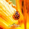 21  G Ladybug on Lily