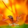 28  G Ladybug on Lily Close
