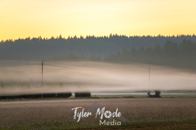 3  G Sunrise Mist