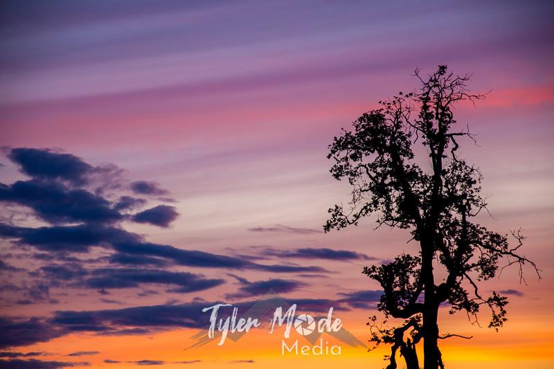37  G Sunset Tree