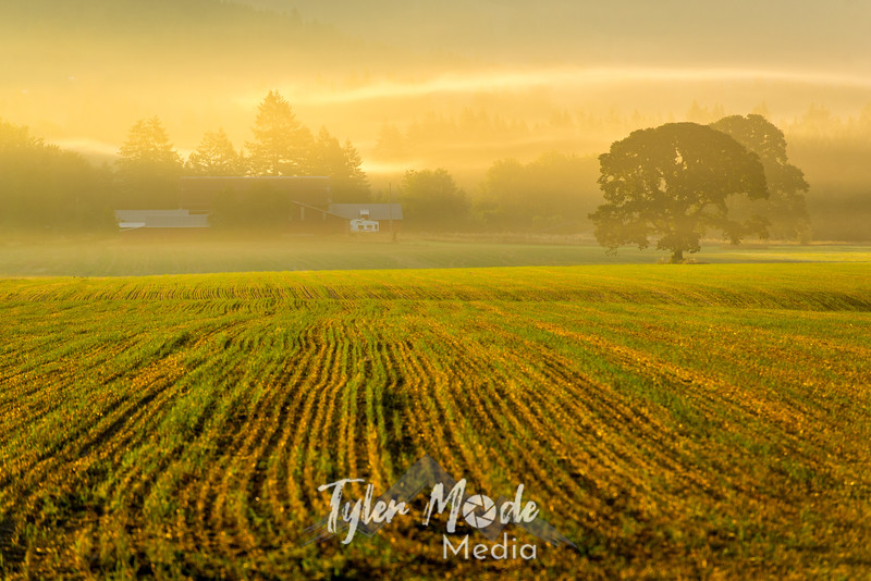 35  G Sunrise Mist Tree Right