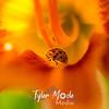 30  G Ladybug on Lily