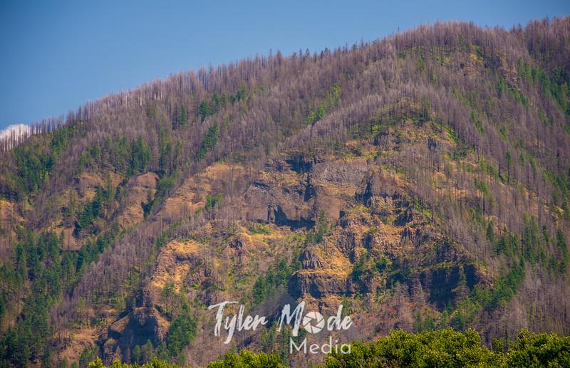 241  G Burned Oregon Gorge