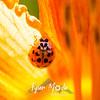19  G Ladybug on Lily