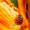 20  G Ladybug on Lily