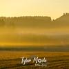 24  G Sunrise Mist
