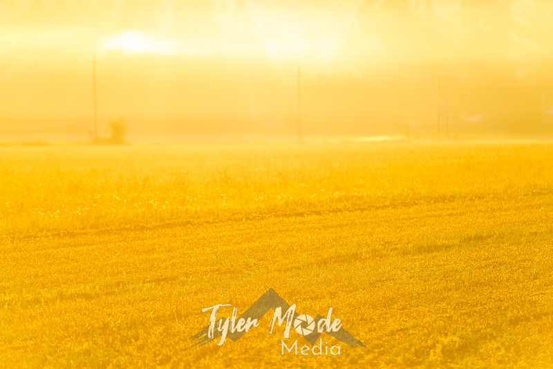 33  G Sunrise Mist Field