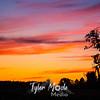 11  G Sunset Tree