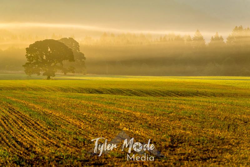 37  G Sunrise Mist Tree Left