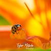 26  G Ladybug on Lily