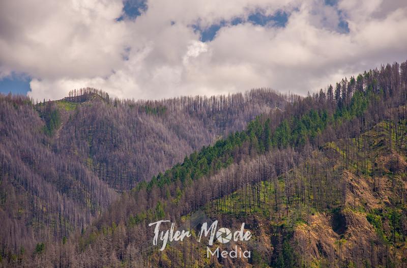 240  G Burned Oregon Gorge