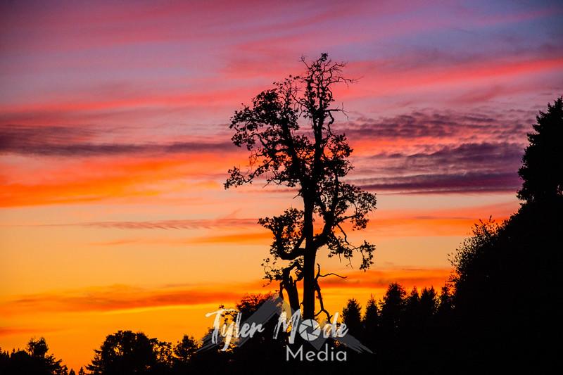 10  G Sunset Tree
