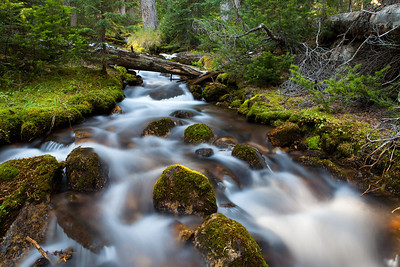 Stream at Paradise Valley, Lake Louise Alberta