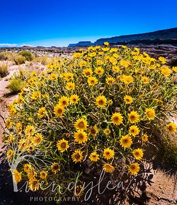 wlc So Utah 05-17155May 22, 2017-Edit