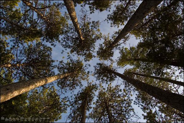 Granite Ridge Trail. Killarney Provincial Park, Ontario.