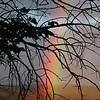 Amazing rainbow after an evening shower