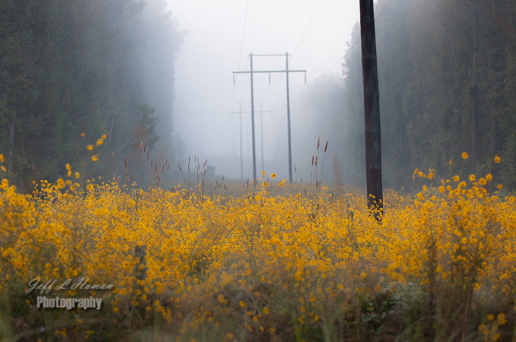 IMAGE: http://jefflhomanphotography.smugmug.com/Landscapes/Sun-Rise/i-wnL4BPK/0/XL/Foggy-power-line-XL.jpg