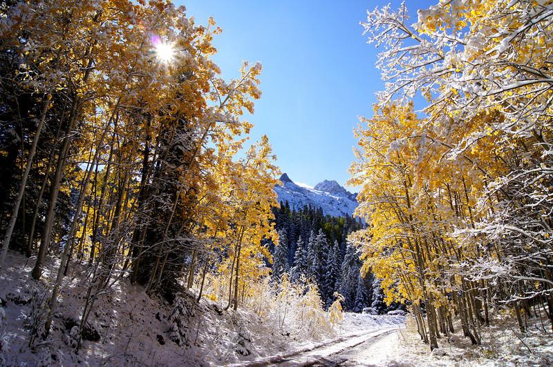 Mid morning sun flares through snow-covered aspens along the East Dallas Creek road beneath Mt. Sneffels, Colorado San Juan Mountains.