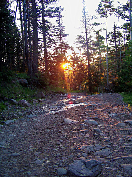 Early morning sun filters through the forest on the South Colony Lakes trail, Colorado Sangre de Cristo range