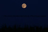 081014-Moon_Corn_1584
