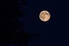 Blue Moon Rising 7/31/15