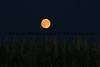 081014-Moon_Corn_1590