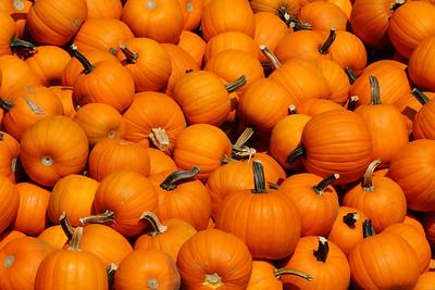 pumpkinIMG_5829