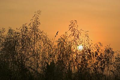 Sunrise 6-18-2006