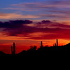 Sunset, Saguaro National Forest, Arizona