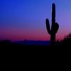 Sunset, Saguaro National Forest, Arizona