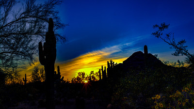 Desert Garden, AZ 019