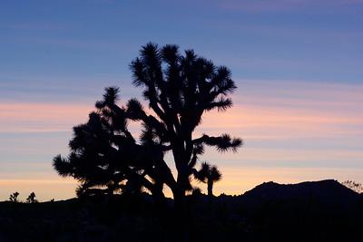 Joshua Tree, CA, 029
