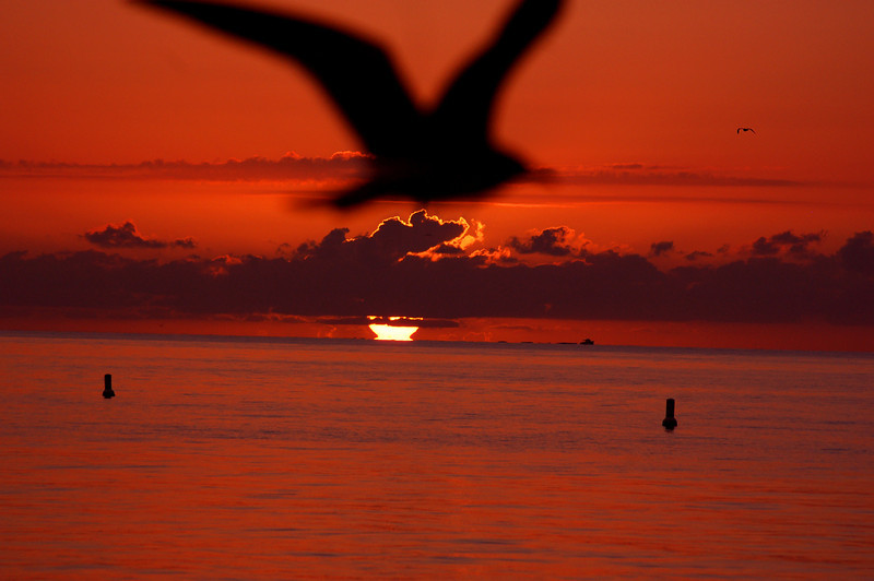 This photo was chosen by CNN.com as their photo of the day on 2.21.11.<br /> Key West October 2010.