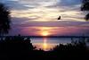 Great Blue Heron at Sunrise <br /> Merritt Island, Florida<br /> 100-2224a