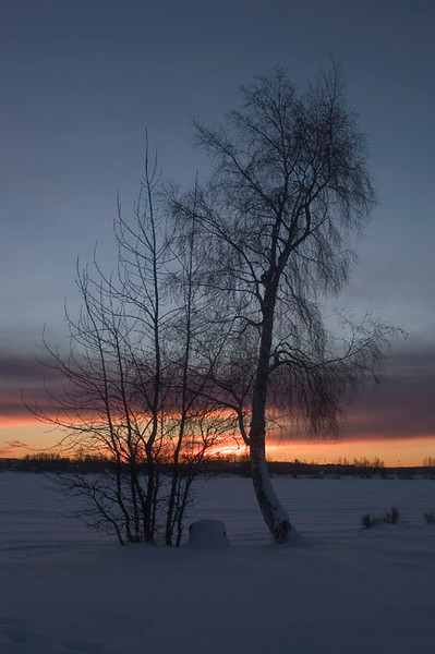 Barren tree against a winter sunset at Lake Hood, within the Muncipality of Anchorage.