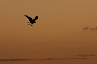 Sunrise, Jupiter Inlet, November Sunrise