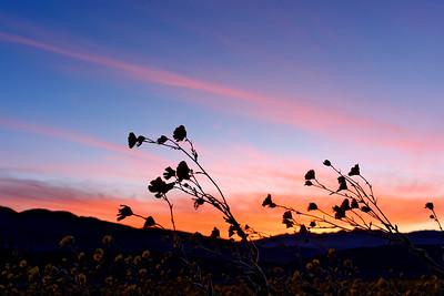Death Valley, CA, 025