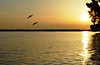 Pelicans at Sunrise <br /> Merritt Island, Florida<br /> 36-0134e