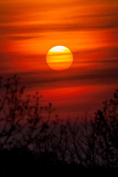 Striated Sun