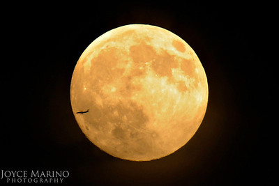 Full moon with plane flying by -- DSC_5284.